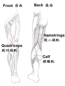 leg cramps, traditional Chinese medicine (TCM)